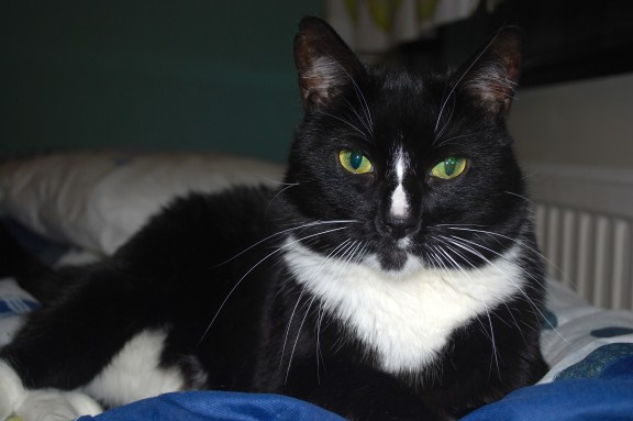 Pikkis-kissa